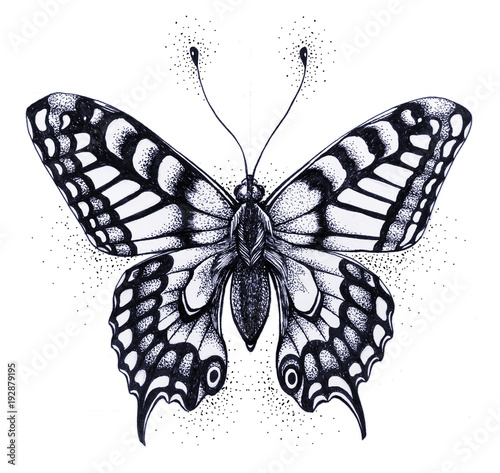 Silhouette Of Butterfly Symbol Of Soul Immortality Rebirth And