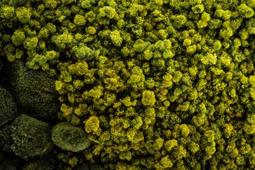 Obraz mech zielony tło - fototapety do salonu
