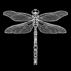 White dragonfly Aeschna Viridls, isolated on black background. Dragonfly tattoo sketch. Coloring books. Hand-drawn vector illustration.