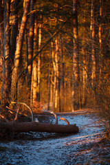 Image of trees, snow trail in woods