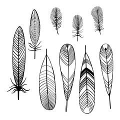 Hand drawn bird feathers.  Vector sketch  illustration.