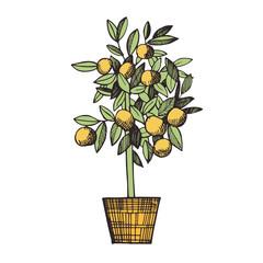 Citrus tree in a pot. Vector sketch  illustration.