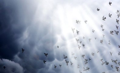 Rain clouds in the sky and a flock of pigeons. The religious con