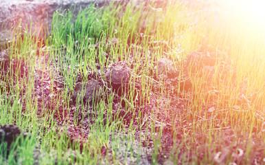 Landscape outside the city. Grassy field and blue sky. Sunset ov