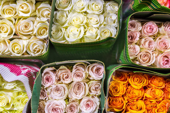 Hundreds of multicolored roses wrapped in paper. Fresh flower background. Flower growing and production business. Wholesale and retail trade. Flower shipping and logistics