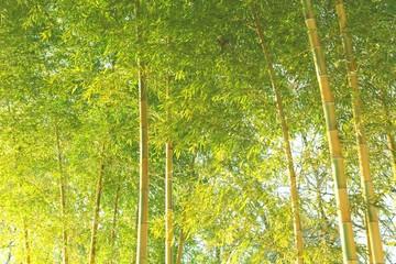 爽やかな竹林