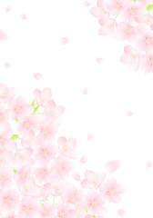 さくら 桜吹雪 イラスト