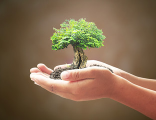 World soil day concept: Human hands holding big tree over blurred world map of clouds background