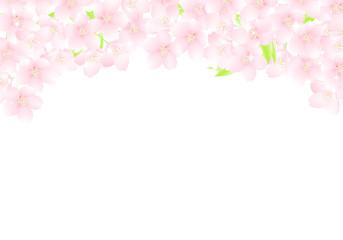 サクラの花のアーチ キラキラ イラスト