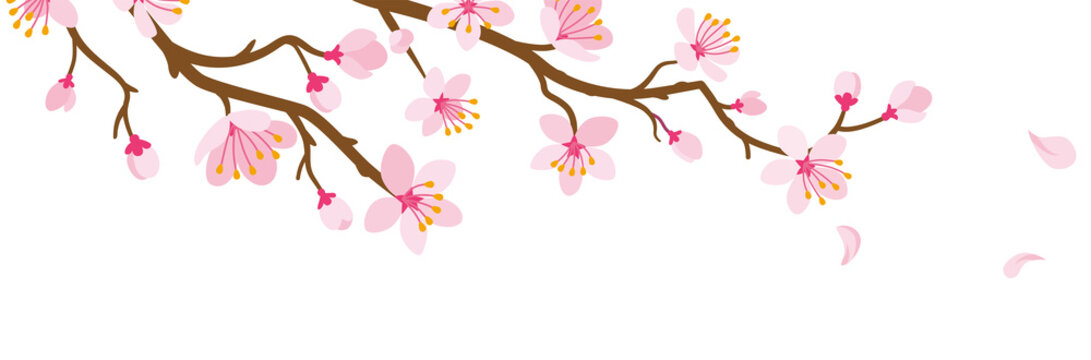 Cherry blossom Branch and Falling Petals