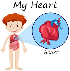 Human anatomy diagram with boy and heart