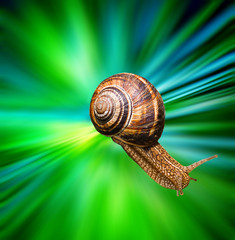 Snail close up on multicolored blurred background. Travel in hyperspace concept