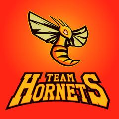 Modern professional logo for sport team. Hornet mascot. Hornets, vector symbol on a light background.