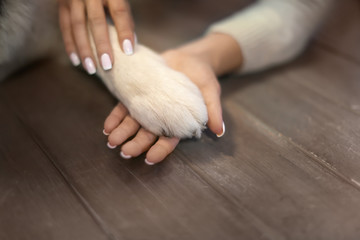 Young woman holding dog's paw indoors. Pet adoption