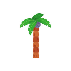 Single, one coconut palm tree with straight stem, flat cartoon vector illustration isolated on white background. Flat cartoon vector illustration of coconut palm tree