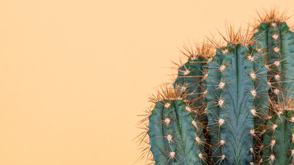 Wall Murals Cactus Cactus plant close up. Trendy yellow minimal background with cactus plant.