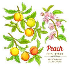 peach vector set
