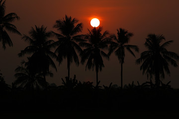 Silhouette palm tree and sunset summer nature background.