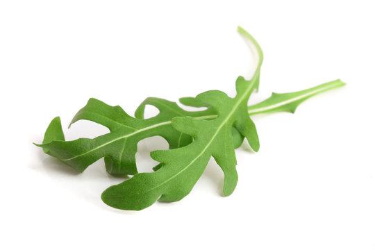 Green fresh rucola or arugula leaf isolated on white background macro