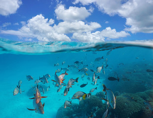 Cloudy blue sky and a shoal of tropical fish with coral underwater, split view above and below water surface, Rangiroa, Tuamotus, Pacific ocean, French Polynesia