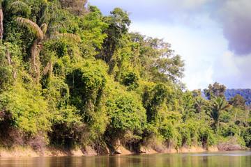 The nature of Surinam