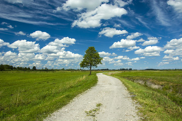 Pebble road, tree and clouds in the sky