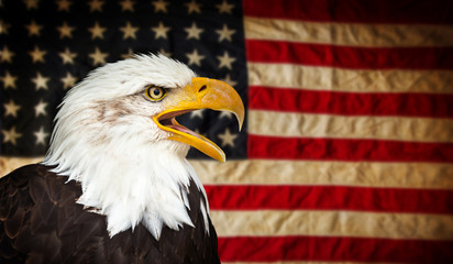 Fototapete - American Bald Eagle with Flag.