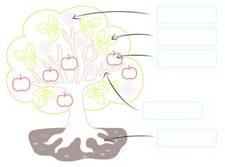 parts of tree vector
