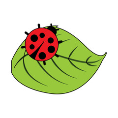 cute ladybug in leaf natural wildlife animal vector illustration
