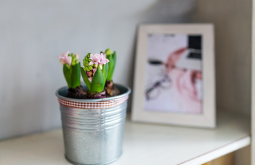Flower in flowerpot and photo. Home decoration.