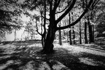 Монохромный кадр старого дерева.
