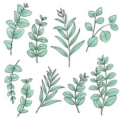 Eucaliptus leaves flowers set of drawings. Ideal for using in wedding invitation designs.