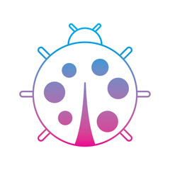 cute ladybug dotted animal insect wildlife vector illustration degrade color line image