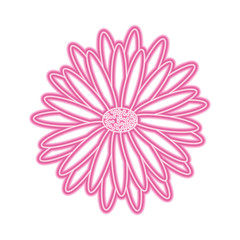 beautiful natural flower daisy petals decoration vector illustration pink neon image