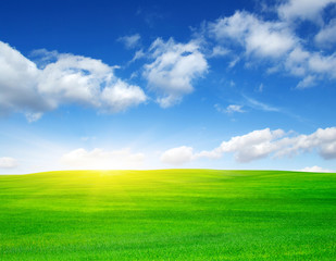 Fototapete - Green field and sun.