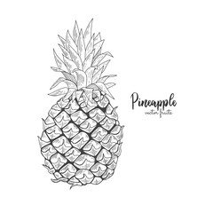 Vector line illustration in engraving style. Exotic tropical pineapple on white background. Detailed fruit drawing. Great for label, poster, print, packaging design.