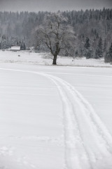 Curved track in snow on the field  around the single tree