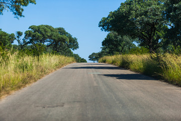 A long tar road in the Kruger Park, South Africa.