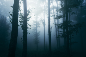 old trees in dark woods, fantasy landscape