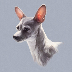 Illustration of Toy Fox Terrier isolated on gray background. Dog is man's best friend. Animal collection: Dogs. Hand Painted Illustration of Pets. Art for card, cover, banner, T-shirt