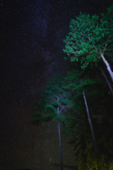 Wall Mural - Landscape with stars over tree. Night sky with stars and tree. Long exposure photograph.