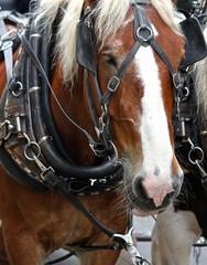 Working Horse 2