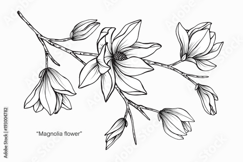 Magnolia flower drawing illustration black and white with line art magnolia flower drawing illustration black and white with line art mightylinksfo