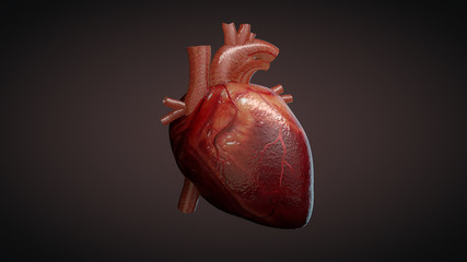 3D illustration of a human heart