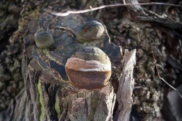 Baum Baumpilz Baumschwamm