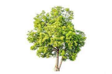 The green tree is beautiful.