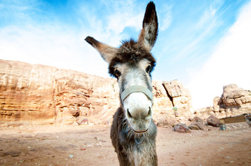 Donkey on a desert in Jordan national park - Wadi Rum desert. Travel photoshoot. Natural background.