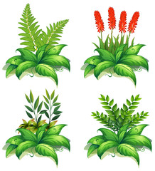 Four types of plants on white background