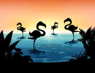 Sihouette scene with flamingo in the pond