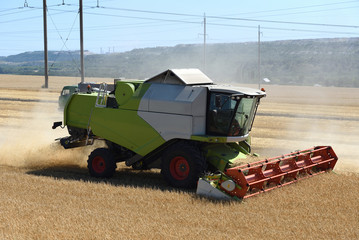Special technique, combine harvester, cuts unripened wheat in the field